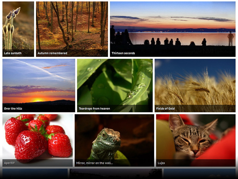 WordPress Image Gallery mit Justified Layout